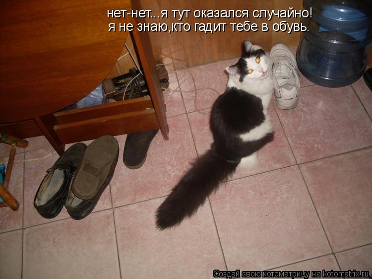 Котоматрица: нет-нет...я тут оказался случайно! я не знаю,кто гадит тебе в обувь.
