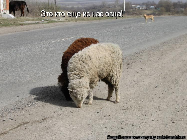 Котоматрица: Это кто еще из нас овца!