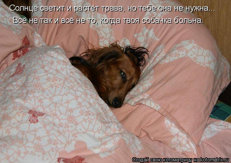 Котоматрица: Солнце светит и растёт трава, но тебе она не нужна... Всё не так и всё не то, когда твоя собачка больна.
