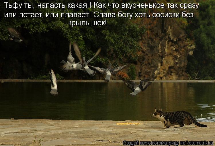 Котоматрица: Тьфу ты, напасть какая!! Как что вкусненькое так сразу или летает, или плавает! Слава богу хоть сосиски без  крылышек!