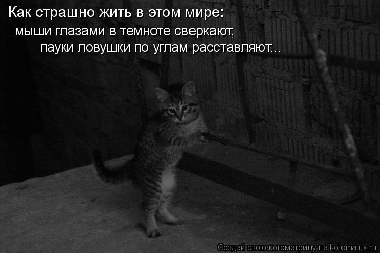 Котоматрица: Как страшно жить в этом мире:  мыши глазами в темноте сверкают,  пауки ловушки по углам расставляют...