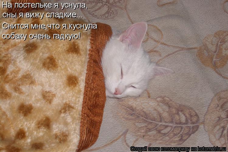 Котоматрица: На постельке я уснула, сны я вижу сладкие... Снится мне,что я куснула собаку очень гадкую!