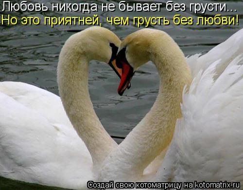 Котоматрица: Любовь никогда не бывает без грусти... Но это приятней, чем грусть без любви!