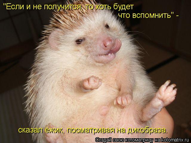 """Котоматрица: """"Если и не получится, то хоть будет что вспомнить"""" -  сказал ёжик, посматривая на дикобраза."""
