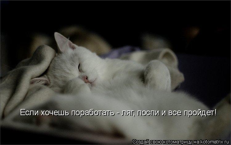 Котоматрица: Если хочешь поработать - ляг, поспи и все пройдет!