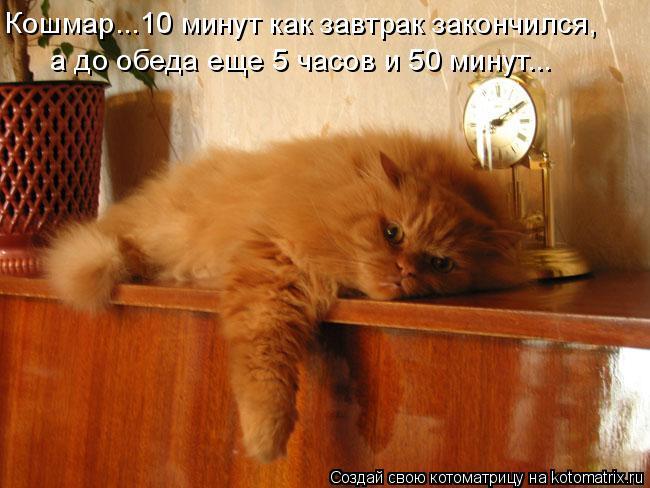 Котоматрица: Кошмар...10 минут как завтрак закончился,  а до обеда еще 5 часов и 50 минут...