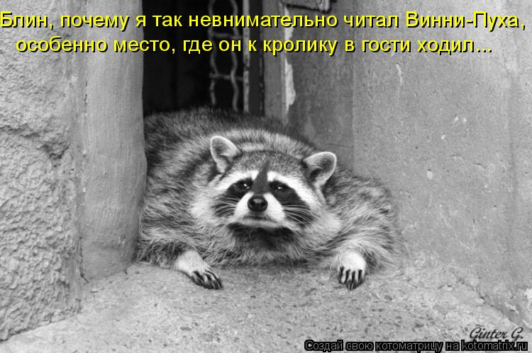Котоматрица: Блин, почему я так невнимательно читал Винни-Пуха,  особенно место, где он к кролику в гости ходил...