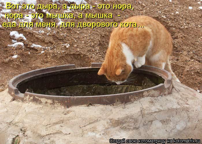 Котоматрица: Вот это дыра, а дыра - это нора,  нора - это мышка, а мышка  -  еда для меня, для дворового кота...