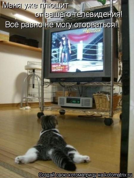 Котоматрица: Меня уже плющит  от вашего телевидения! Всё равно не могу оторваться!