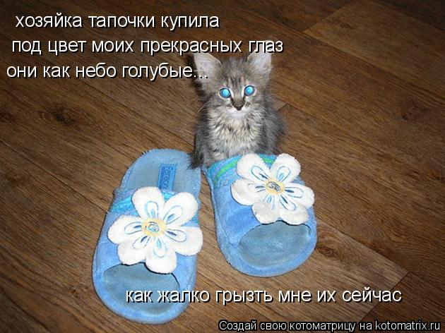 Котоматрица: хозяйка тапочки купила под цвет моих прекрасных глаз они как небо голубые... как жалко грызть мне их сейчас