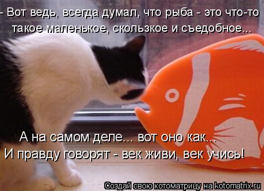 Котоматрица: - Вот ведь, всегда думал, что рыба - это что-то такое маленькое, скользкое и съедобное... А на самом деле... вот оно как... И правду говорят - век жи