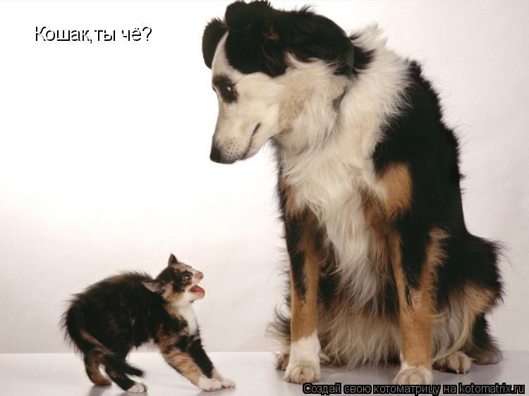 Котоматрица: Кошак,ты чё?