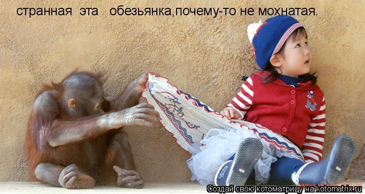 Котоматрица: странная  эта   обезьянка,почему-то не мохнатая.