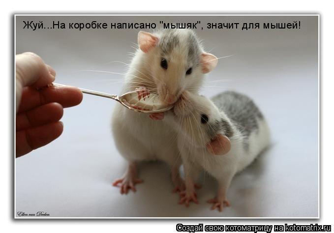 "Котоматрица: Жуй...На коробке написано ""мышяк"", значит для мышей!"