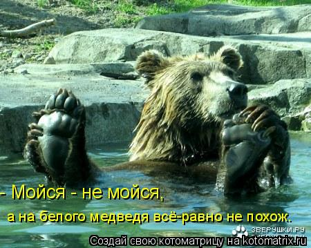 Котоматрица: - Мойся - не мойся, а на белого медведя всё-равно не похож.