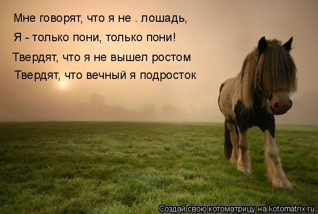 Котоматрица: Мне говорят, что я не – лошадь, Я - только пони, только пони! Твердят, что я не вышел ростом Твердят, что вечный я подросток