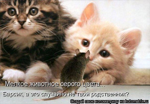 Котоматрица: Мелкое животное серого цвета... Барсик, а это случайно не твой родственник?