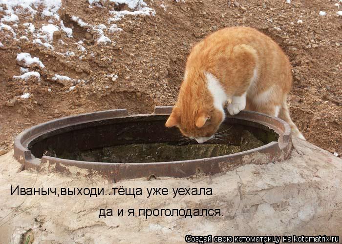 Котоматрица: Иваныч,выходи..тёща уже уехала  да и я проголодался.