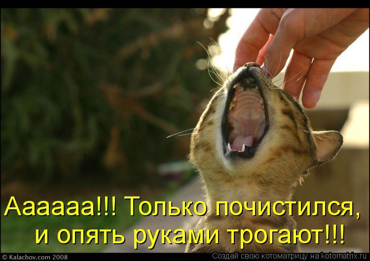 Котоматрица: Аааааа!!! Только почистился,  и опять руками трогают!!!