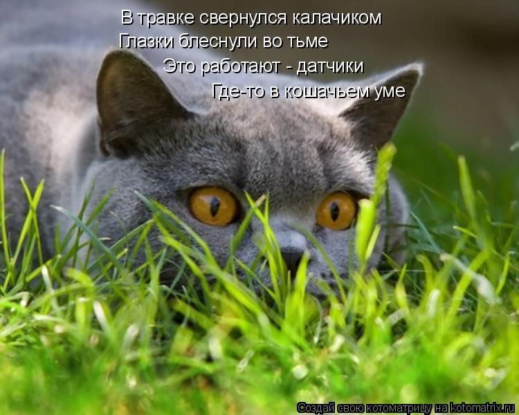 Котоматрица: В травке свернулся калачиком Глазки блеснули во тьме Это работают - датчики Где-то в кошачьем уме