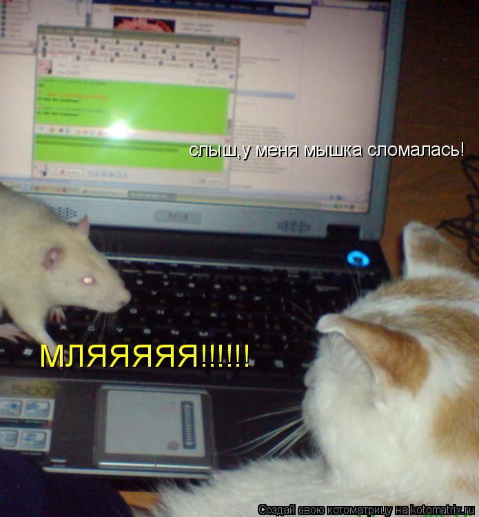 Котоматрица: слыш,у меня мышка сломалась! МЛЯЯЯЯЯ!!!!!!