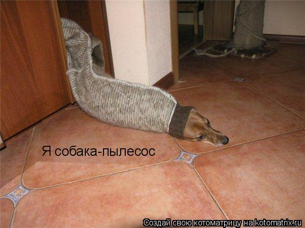Котоматрица: Я собака-пылесос