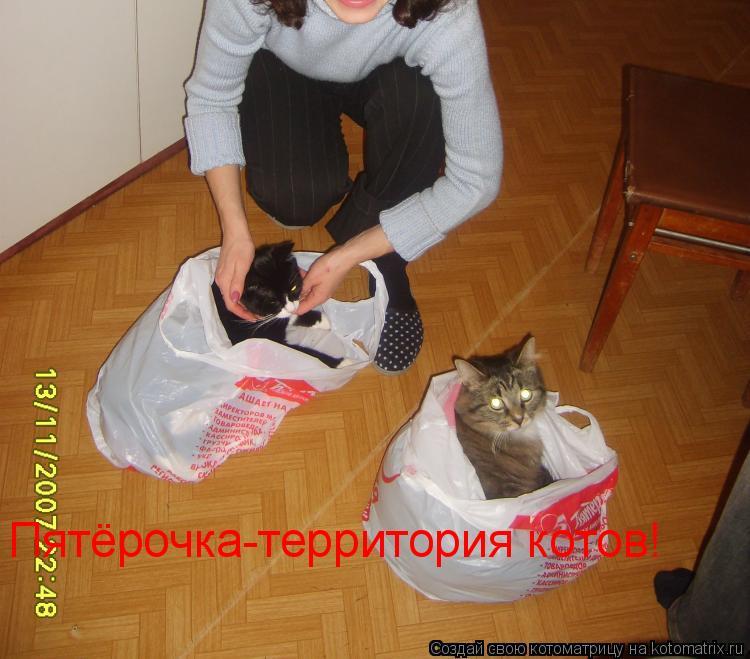 Котоматрица: Пятёрочка-территория котов!