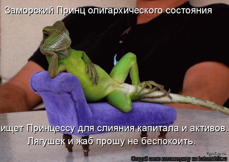 Котоматрица: Заморский Принц олигархического состояния Лягушек и жаб прошу не беспокоить. ищет Принцессу для слияния капитала и активов.