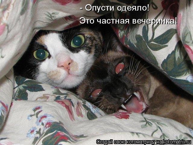 Котоматрица: - Опусти одеяло! Это частная вечеринка!