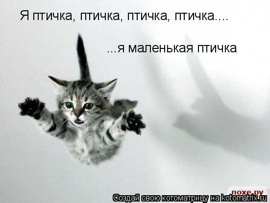 Котоматрица: Я птичка, птичка, птичка, птичка.... ...я маленькая птичка