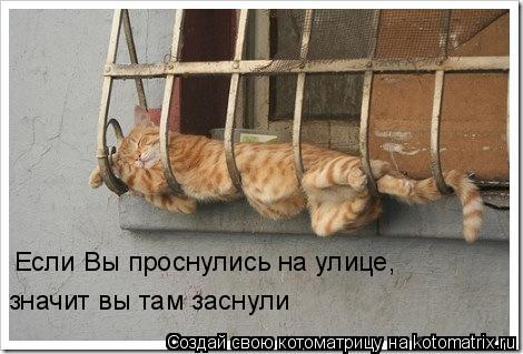 Котоматрица: Если Вы проснулись на улице,  значит вы там заснули