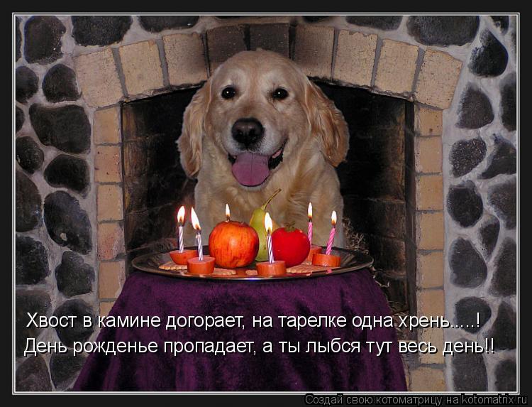 Котоматрица: Хвост в камине догорает, на тарелке одна хрень.....! День рожденье пропадает, а ты лыбся тут весь день!!