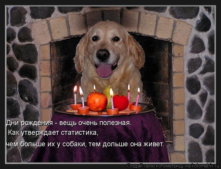 Котоматрица: Дни рождения - вещь очень полезная.  Как утверждает статистика,  чем больше их у собаки, тем дольше она живет.