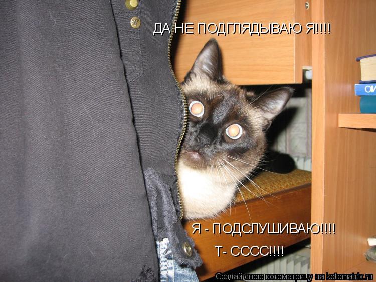 Котоматрица: ДА НЕ ПОДГЛЯДЫВАЮ Я!!!! Я - ПОДСЛУШИВАЮ!!!! Т- СССС!!!!