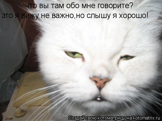 Котоматрица: это я вижу не важно,но слышу я хорошо! что вы там обо мне говорите?