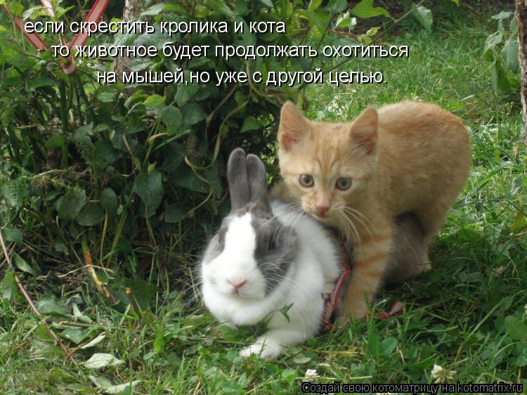 Котоматрица: если скрестить кролика и кота то животное будет продолжать охотиться на мышей,но уже с другой целью.