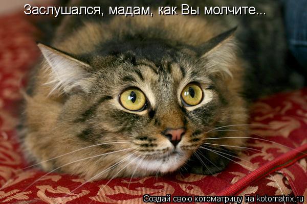 Котоматрица: Заслушался, мадам, как Вы молчите...
