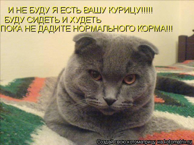 Котоматрица: И НЕ БУДУ Я ЕСТЬ ВАШУ КУРИЦУ!!!!! БУДУ СИДЕТЬ И ХУДЕТЬ ПОКА НЕ ДАДИТЕ НОРМАЛЬНОГО КОРМА!!!