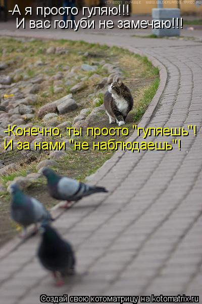 """Котоматрица: -А я просто гуляю!!!  И вас голуби не замечаю!!! -Конечно, ты просто """"гуляешь""""! И за нами """"не наблюдаешь""""!"""