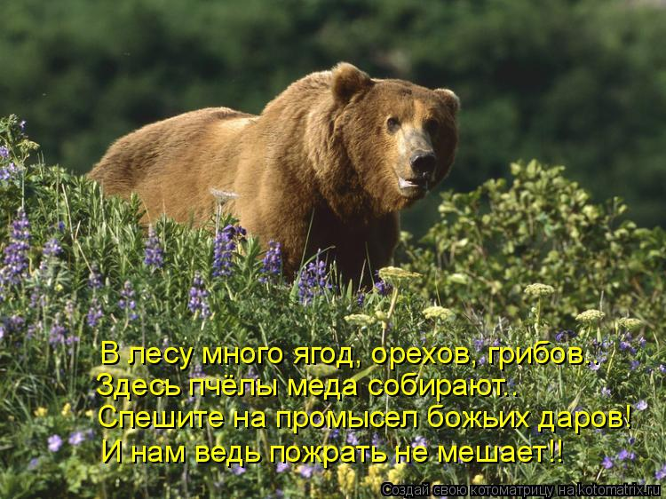 Котоматрица: Здесь пчёлы меда собирают.. Спешите на промысел божьих даров! И нам ведь пожрать не мешает!! В лесу много ягод, орехов, грибов..