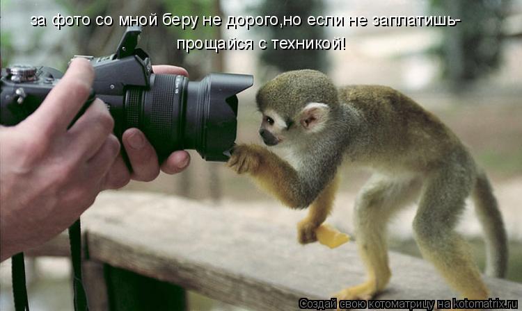Котоматрица: за фото со мной беру не дорого,но если не заплатишь прощайся с техникой! -
