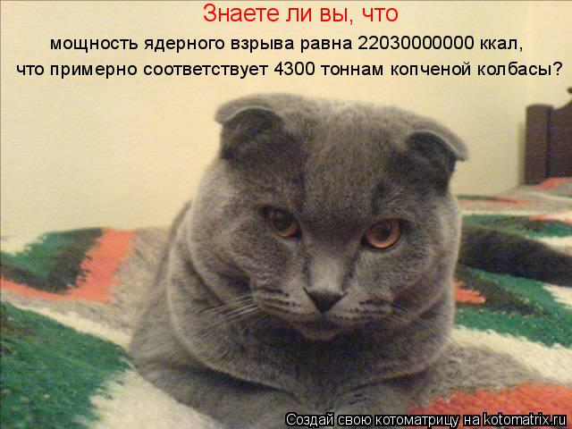 Котоматрица: Знаете ли вы, что мощность ядерного взрыва равна 22030000000 ккал, что примерно соответствует 4300 тоннам копченой колбасы?