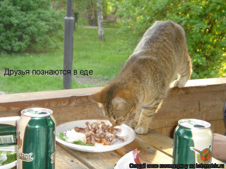 Котоматрица: Друзья познаются в еде