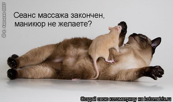 Котоматрица: Сеанс массажа закончен, маникюр не желаете?