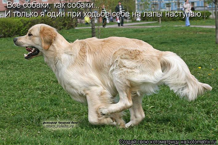 Котоматрица: Все собаки, как собаки...  И только я один при ходьбе себе на лапы наступаю...