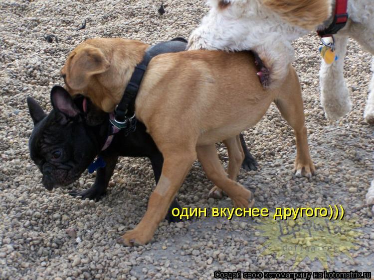 Котоматрица: один вкуснее другого)))