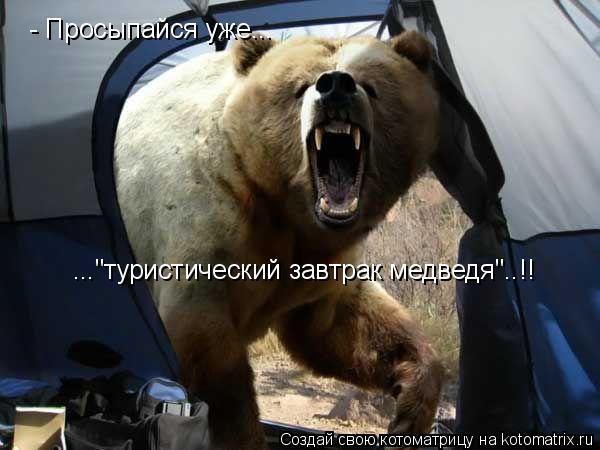 """Котоматрица: - Просыпайся уже... ...""""туристический завтрак медведя""""..!!"""