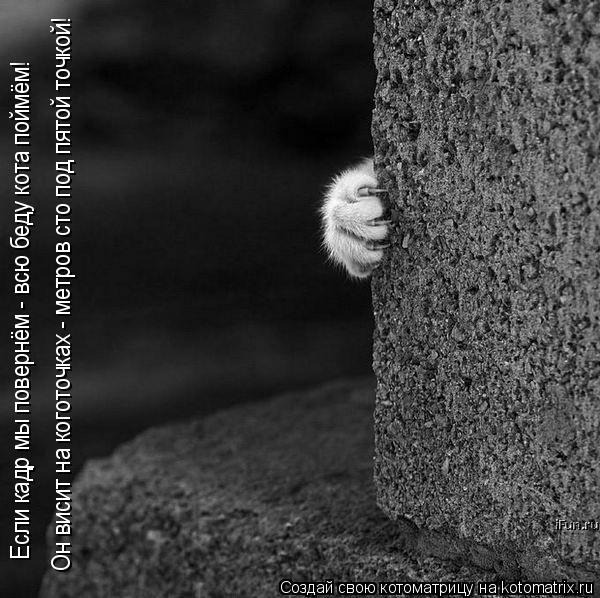 Котоматрица: Он висит на коготочках - метров сто под пятой точкой! Если кадр мы повернём - всю беду кота поймём!