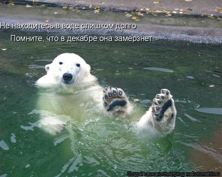 Котоматрица: Не находитесь в воде слишком долго Помните, что в декабре она замерзнет.