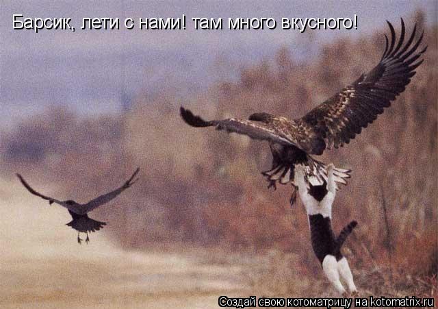Котоматрица: Барсик, лети с нами! там много вкусного!